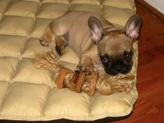 jute rope and sweet potatoes toy (via instructables)