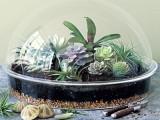 Cool Tabletop Terrariums