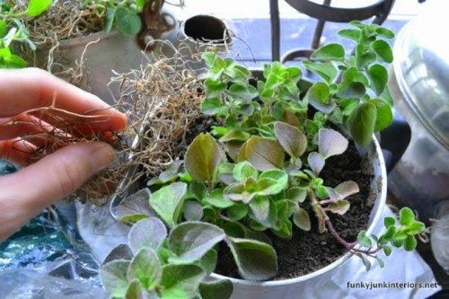Cool Vintage Garden Of Old Fashioned Kettles