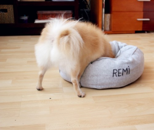 round pet pillow bed (via thefirstlime)