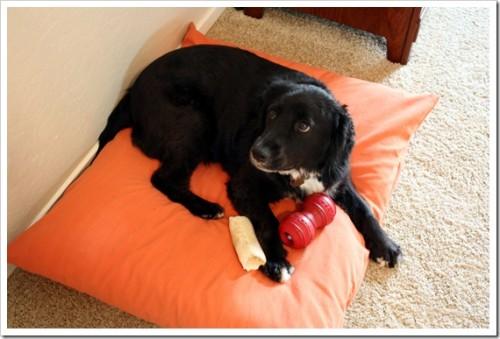 two pillow dog bed (via joyfulabode)