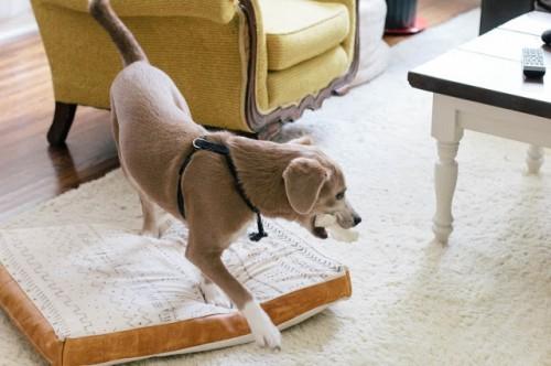 flat pillow dog bed (via alwaysrooney)