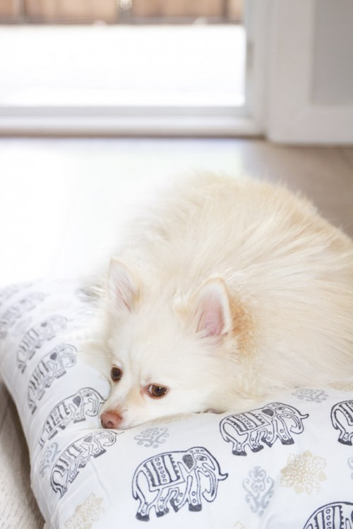 11 Cozy And Super Easy Diy Pillow Dog Beds Shelterness