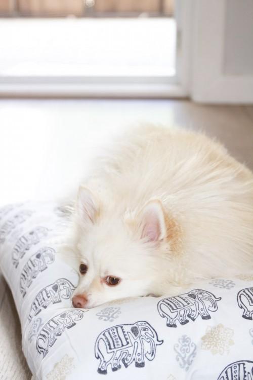 custom fabric dog bed (via horsesandheels)