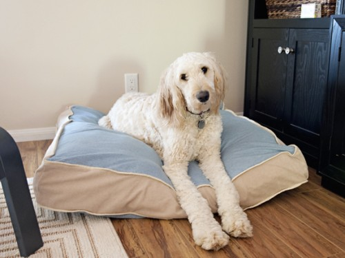 11 Cozy And Super Easy DIY Pillow Dog Beds