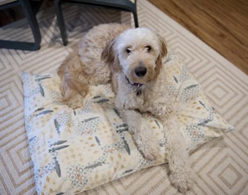 pillow case dog bed (via stumbleupon)