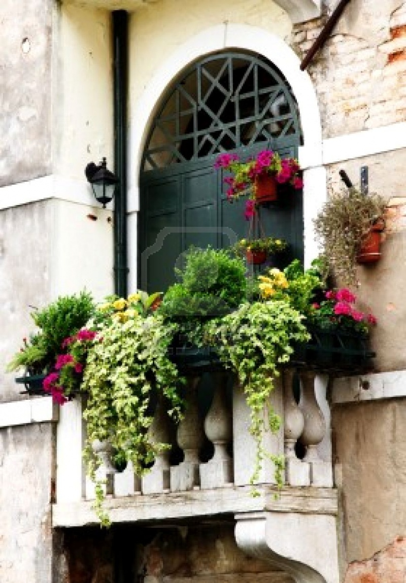 Picture of cozy balconies for How to decorate terrace with plants