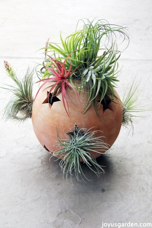 14 Creative DIY Air Plant Décor Ideas