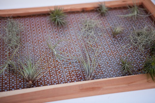 air plant wall (via valleyandcolifestyle)