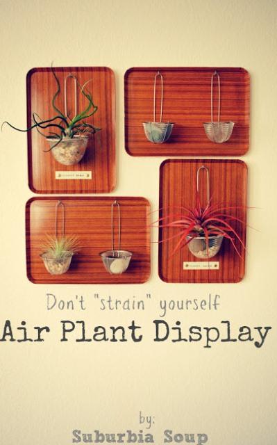 wall air plant display (via shelterness)