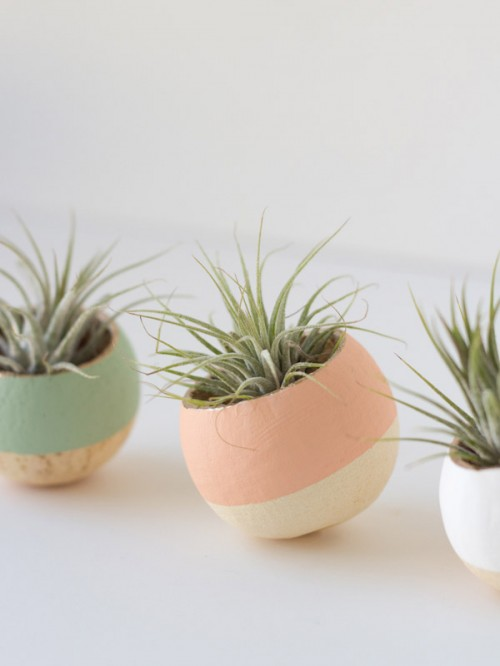 14 Creative Diy Air Plant D 233 Cor Ideas Shelterness