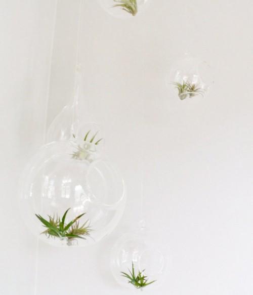 hanging air plant terrariums (via theharpsterhome)