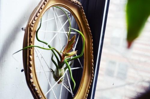 framed air plants (via allthegoodgirlsgotoheavenblog)