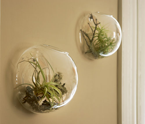 wall vases air plants (via shelterness)