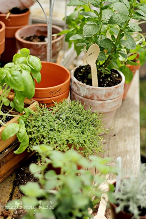 wooden spoon herb markers (via craftberrybush)