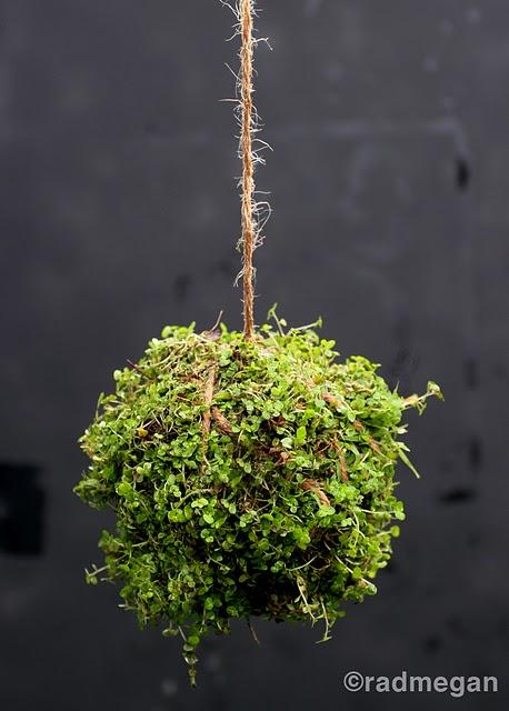 hanging string garden