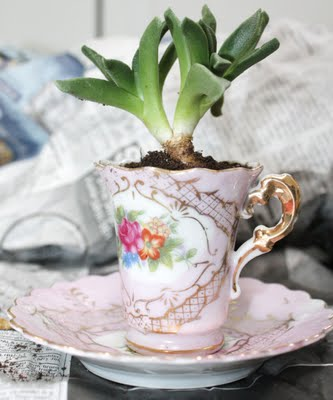 succulent teacup garden (via shelterness)