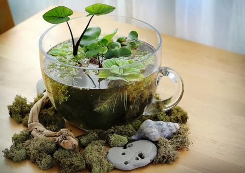 indoor tabletop water garden