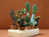 mini succulent and cacti garden