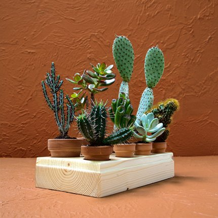 mini succulent and cacti garden (via shelterness)