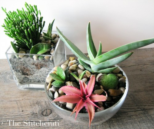 simple indoor succulent garden (via thestitcherati)