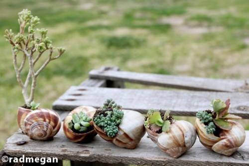 snail shells garden
