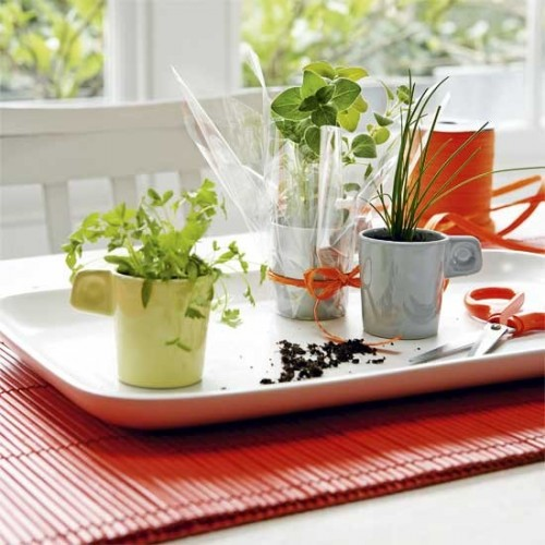 old cups herb garden (via housetohome)
