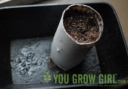 toilet roll seed starter (via yougrowgirl)