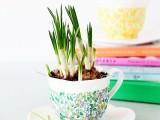 cute-decoupage-diy-spring-inspired-planters-1