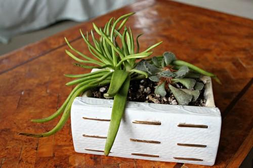 Cute Diy Ceramic Book Succulent Gardens