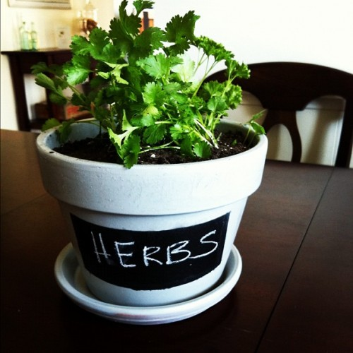 chalkboard labeled planter (via thisblisslife)