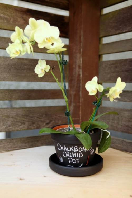 chalkboard orchid planter  (via gardentherapy)