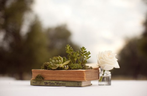 Cute DIY Succulent Book Planters