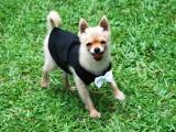 stylish dog shirt