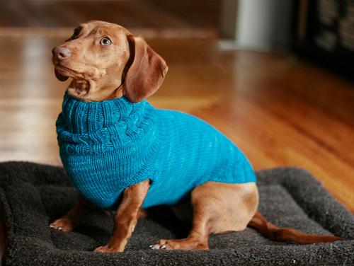 14 Cute Dog Clothes Tutorials - Shelterness