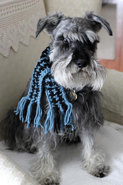 frivolous pet scarf (via gratefulprayerthankfulheart)