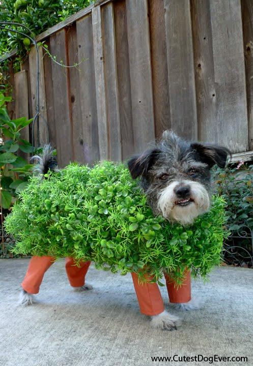 green Halloween costume (via theflirtyguide)