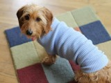 old shirt dog sweater