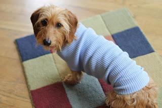 old shirt dog sweater (via thehobbyroomdiaries)