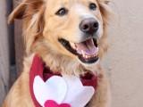 Valentine's Day dog scarf