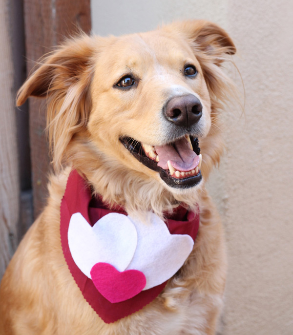 Valentine's Day dog scarf