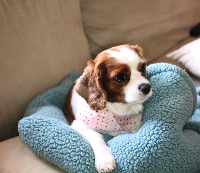 simple dog scarf