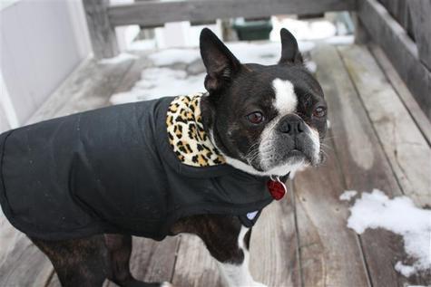 dog coats for nasty weather