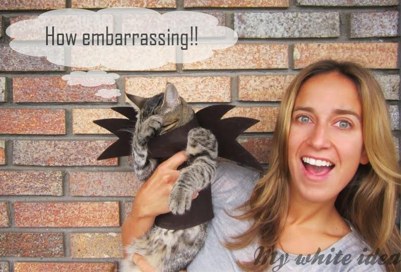 Diy Bat Costume For Your Cat