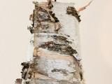 Diy Birch Bark Lmp