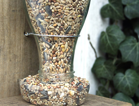 Diy Bird Feed From Recycled Bottle