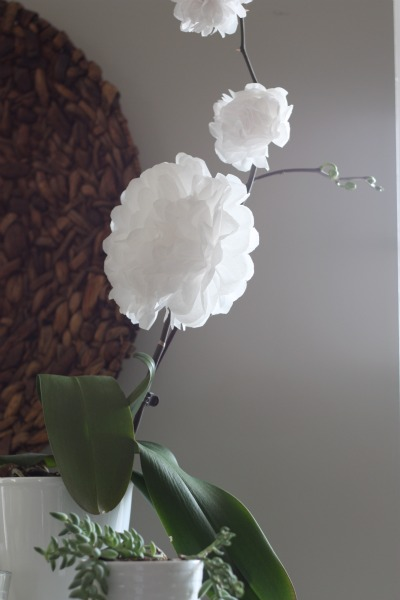 Diy Blooming Orchid
