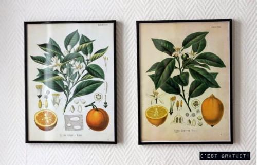 botanical printable wall art (via simplette)
