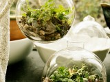 living terrarium with small plants