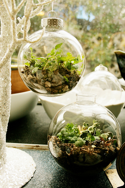 living terrarium with small plants (via thelittlebigblog)